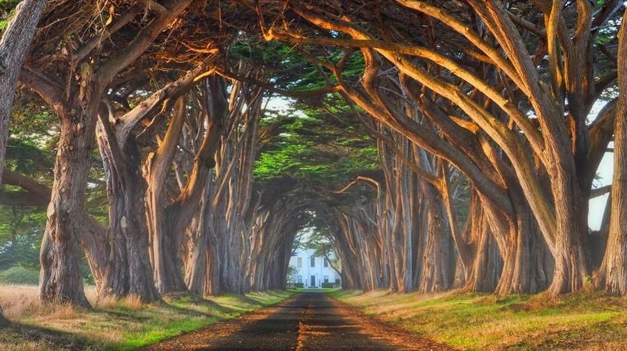 Туннель из деревьев, Португалия