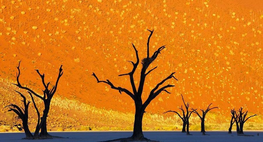 Парк мёртвых деревьев, Намибия (это фотография)