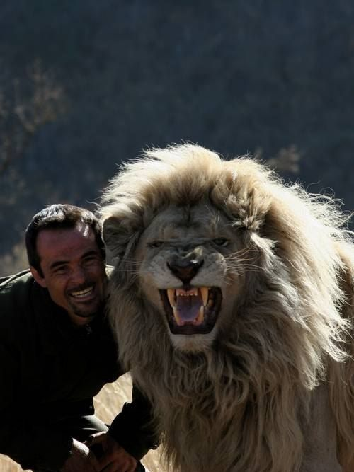 Лев и... человек